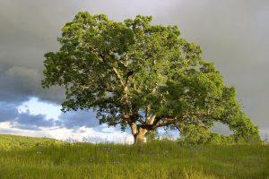 Tree - mental health